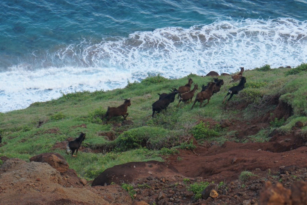 Feral goats abound. You don't want to drink in whatever they're putting out. Treat your water!
