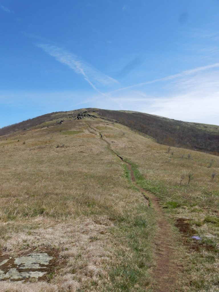 Hump Mountain in Roan Highlands