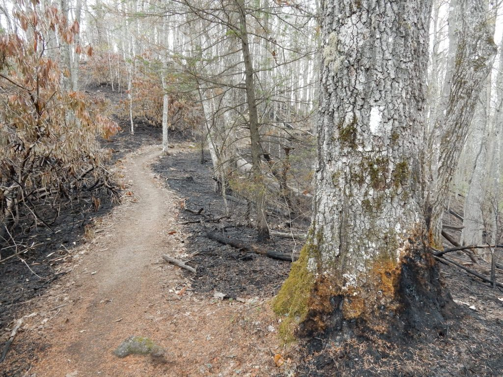 Wildfires burned 1700 acres <2 weeks before we came through. This is what the trail looks like north of Moreland shelter for several miles.
