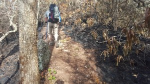 Hiking through the aftermath of a wildfire