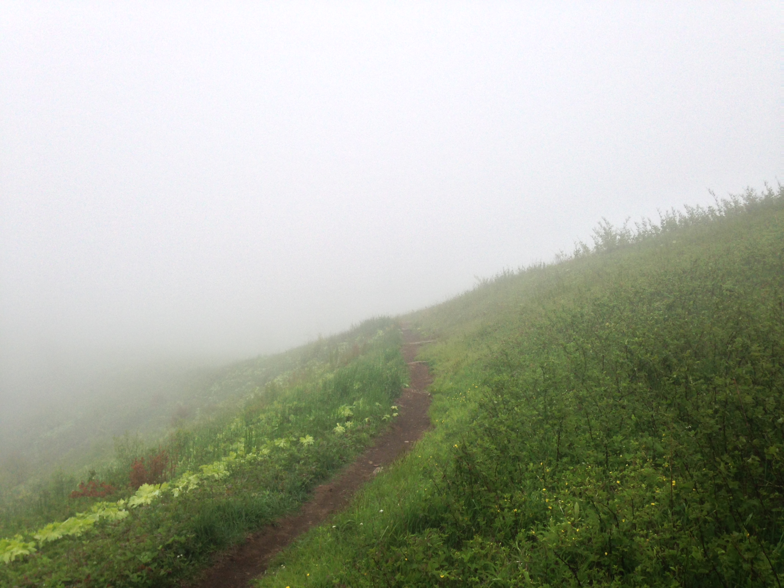No views from Max Patch today!