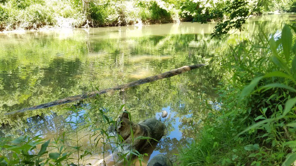 Rogue in Creek