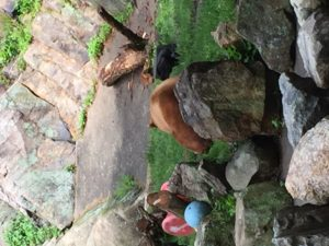 The only bears to date that we've seen on the trail were at Bear Mountain Zoo!