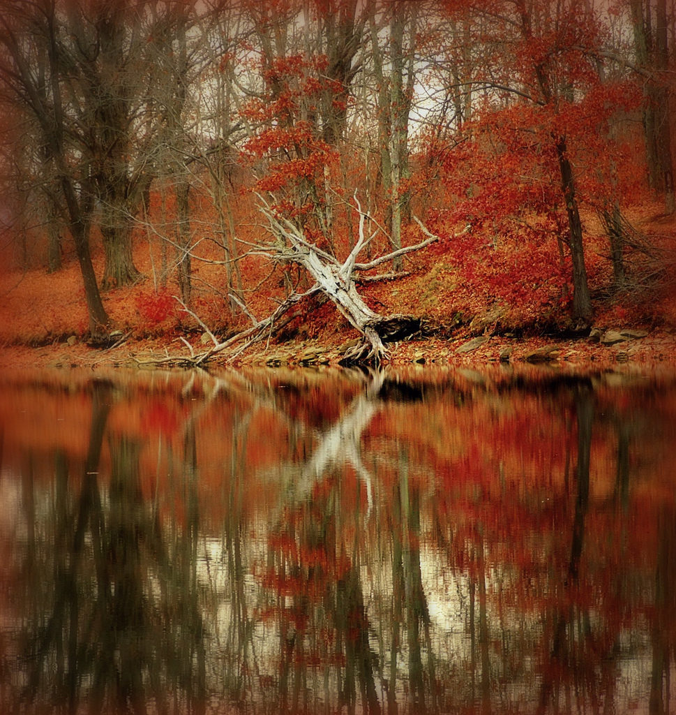 wolf run lake buckeye trail