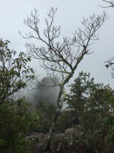AT Hike (35)
