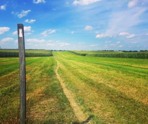 open field, blue sky, post with while blaze