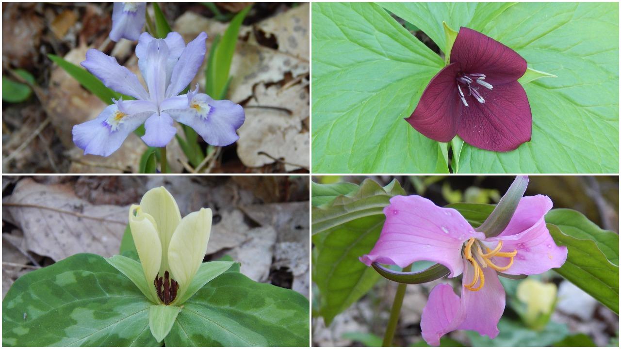 A sampling of spring