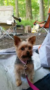 Wicket on her first camping trip