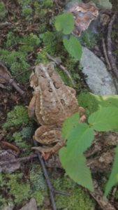 See that toad? He's a faster hiker than me. And he keeps making fun of my pack weight