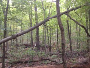 fallen-tree-six