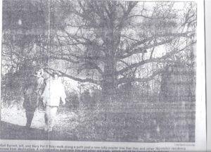 montclair-tree1