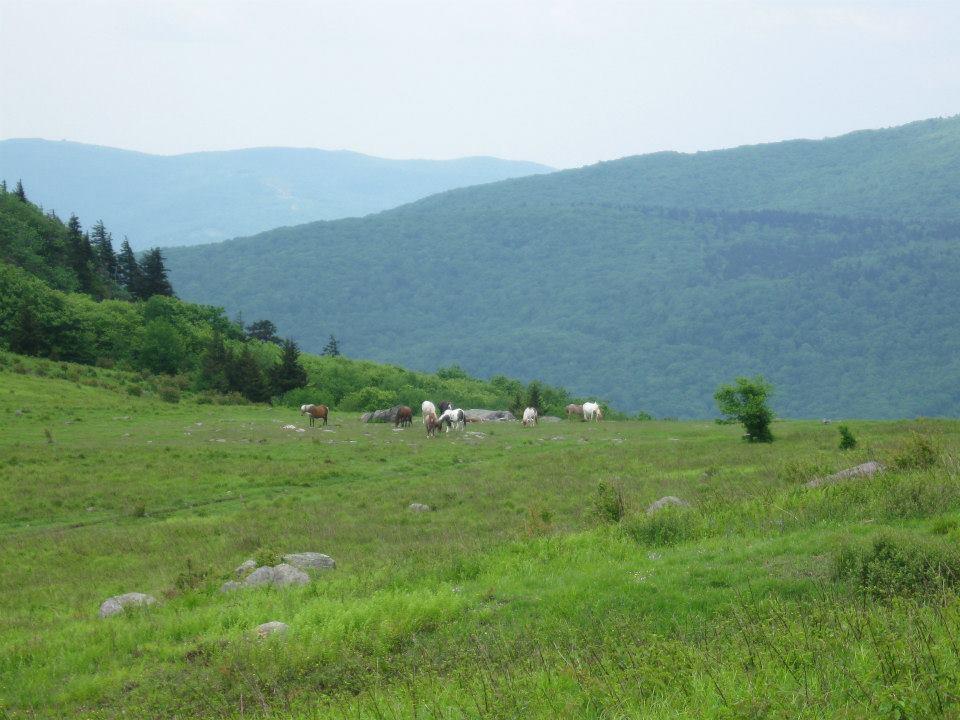 ponies-on-briar-ridge