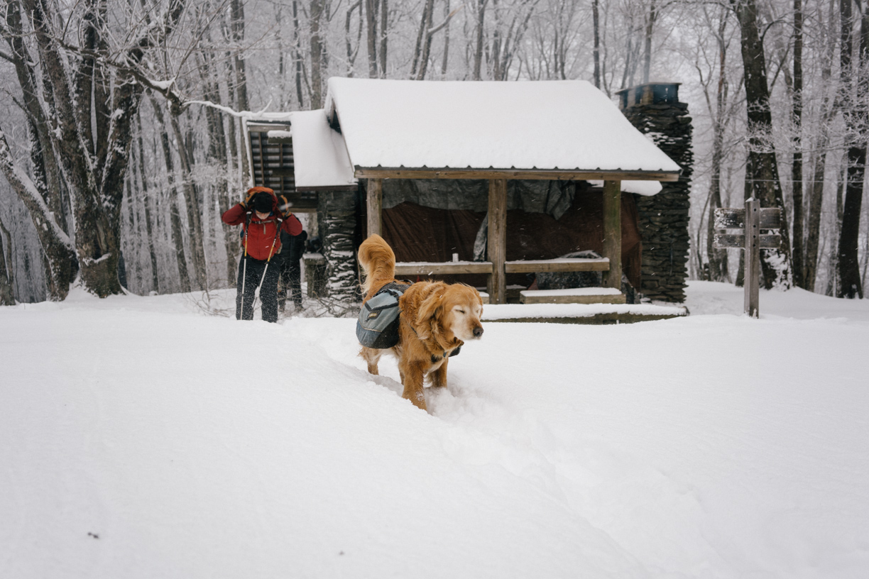 Theo excitedly leads the way through the snow in GSMNP.