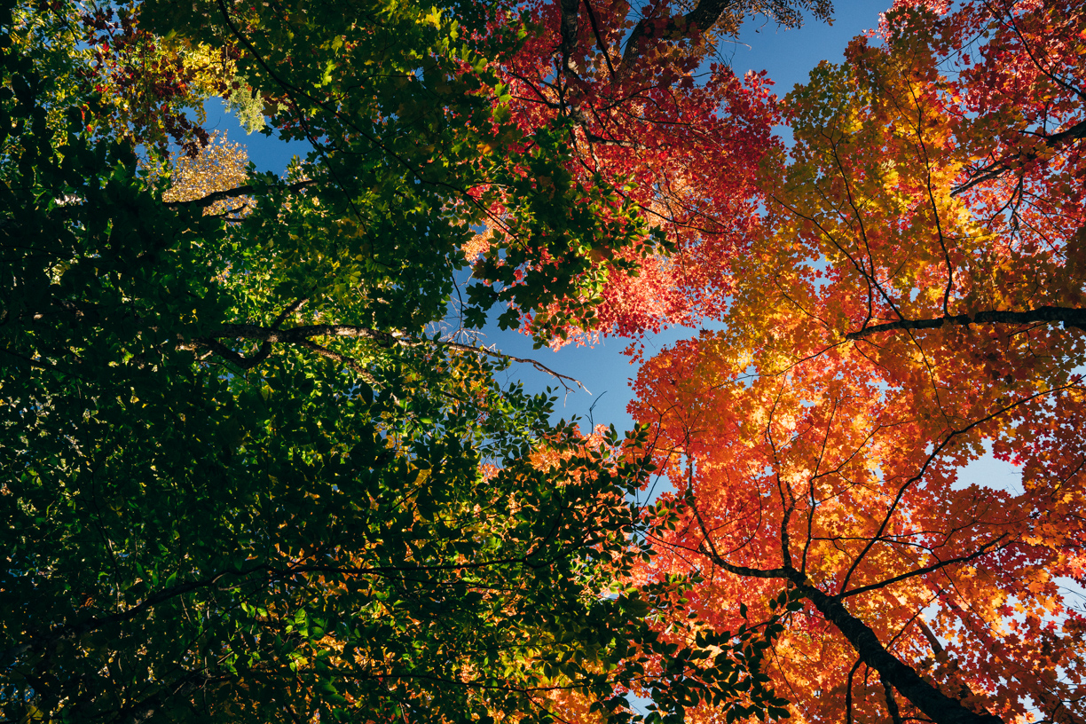 Fall Canopy of Maine.