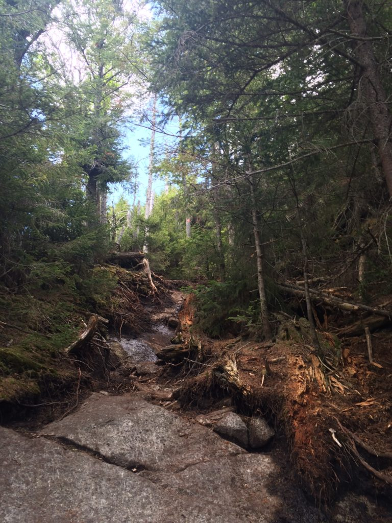 The harsh reality of bagging some ADK peaks - the dreaded out and back hike. We have to go up and down this...twice?! Ugh. For wooded summits no less.