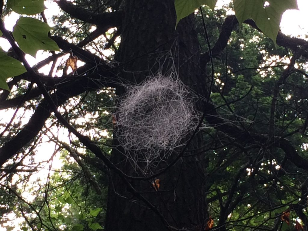 WHAT created this web??!