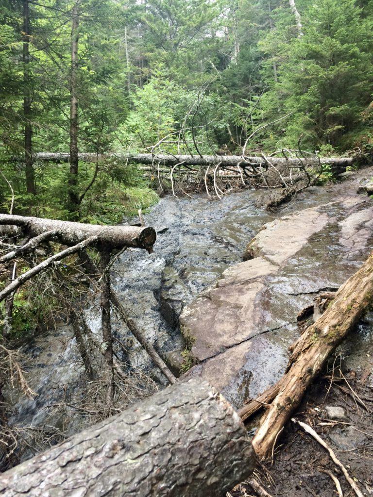 Trail. Yep.