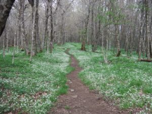 white-flower-path
