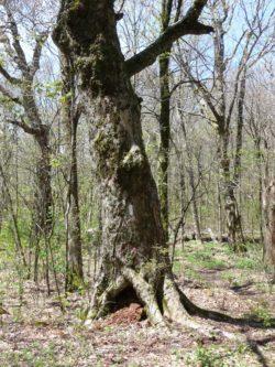 at-tree