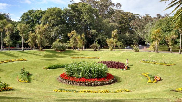 Edible garden in Cornwall Park-- corn, squash, garlic, and other edibles make for an exquisite roundabout.