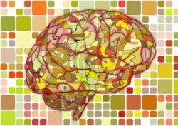 brain-951871_960_720