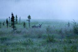 fog-710271_960_720