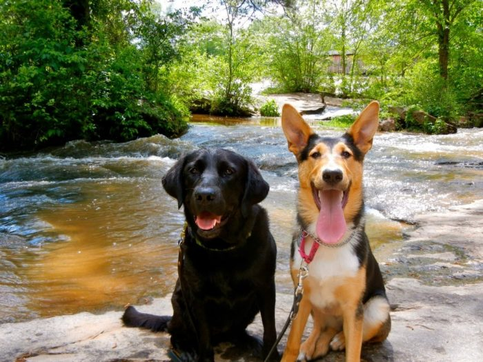 Dogs and The Smokies: What You Need to Know - The Trek