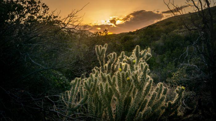 San Felipe Hills