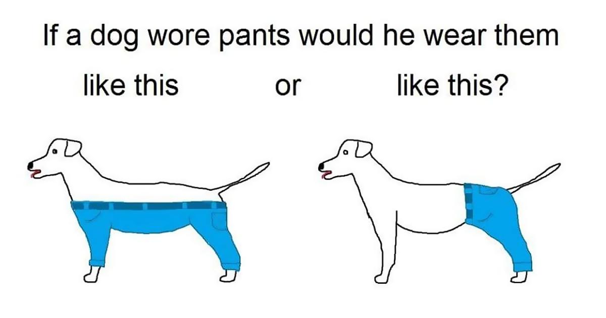 tough-questions-funny-if-dog-wear-pants-fb