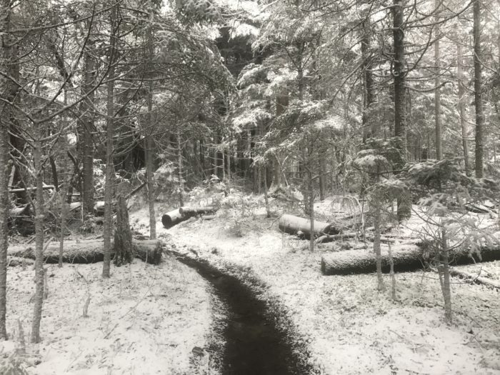 Winter wonderland in the Smokies