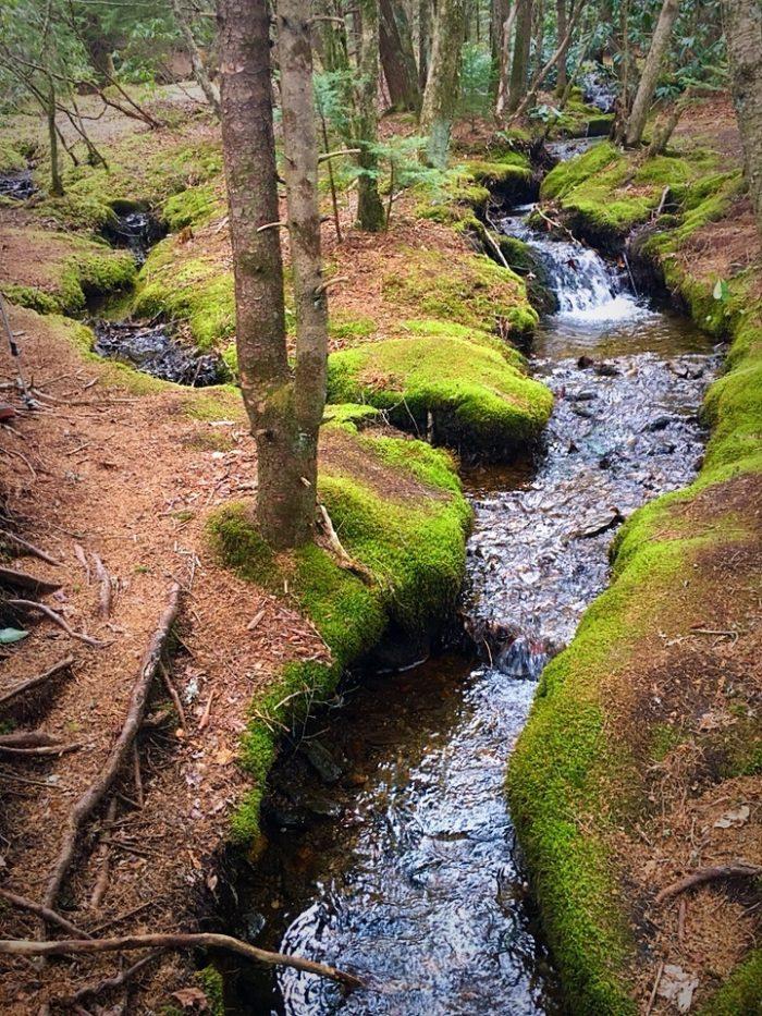 mossy-wonderland