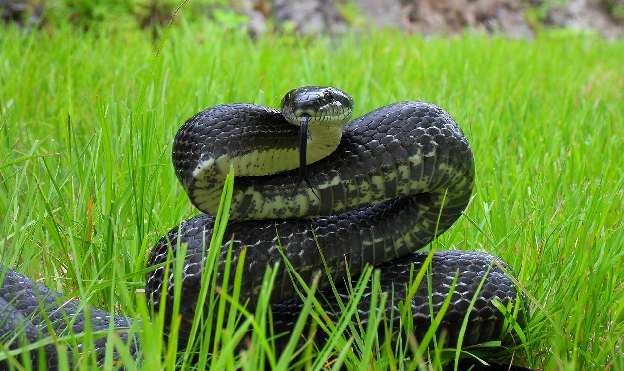 A Love Letter to the Black Snakes of the Appalachian Trail - The Trek