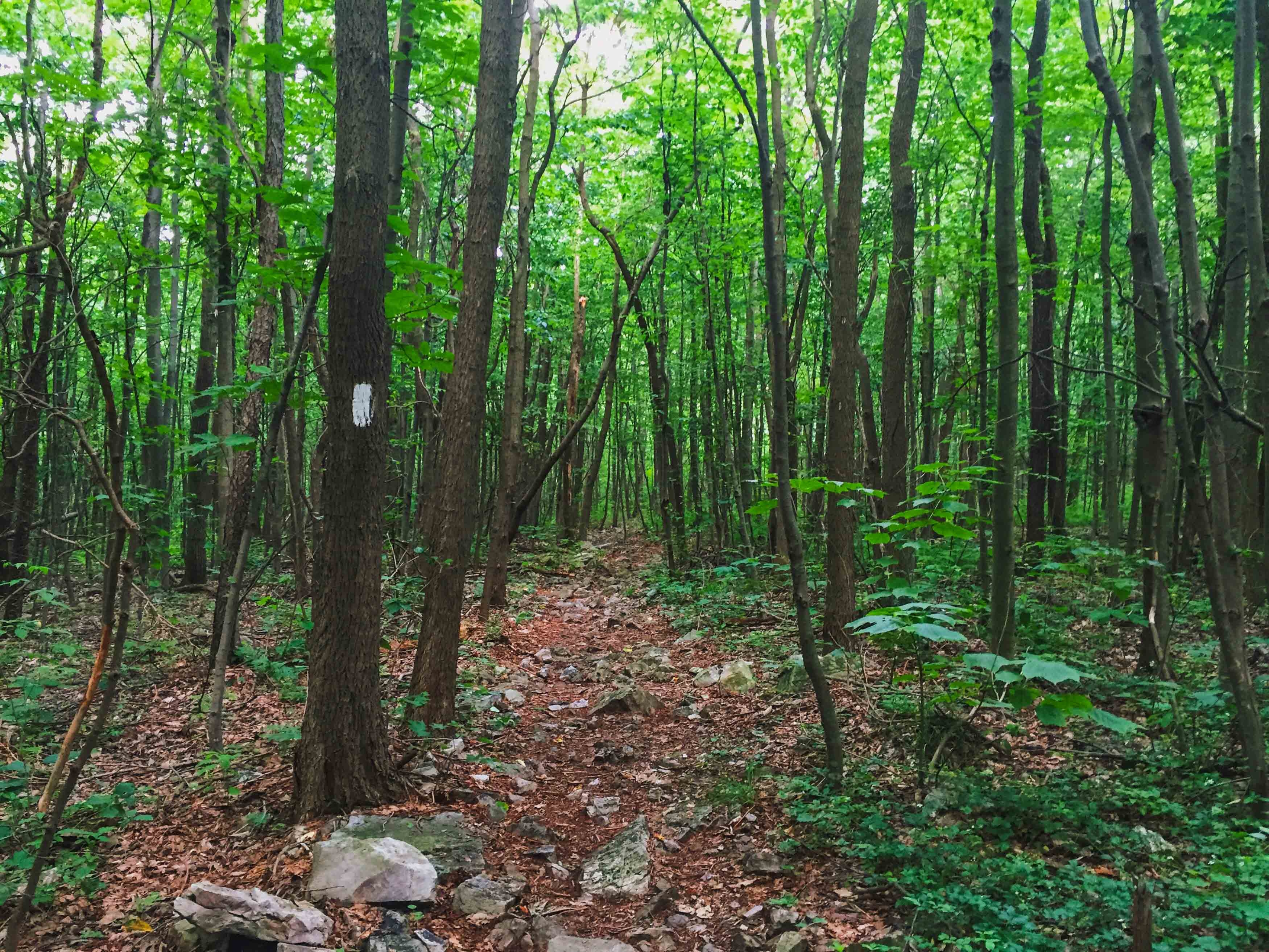 Pennsylvania: Must-See Day Hikes on the Appalachian Trail