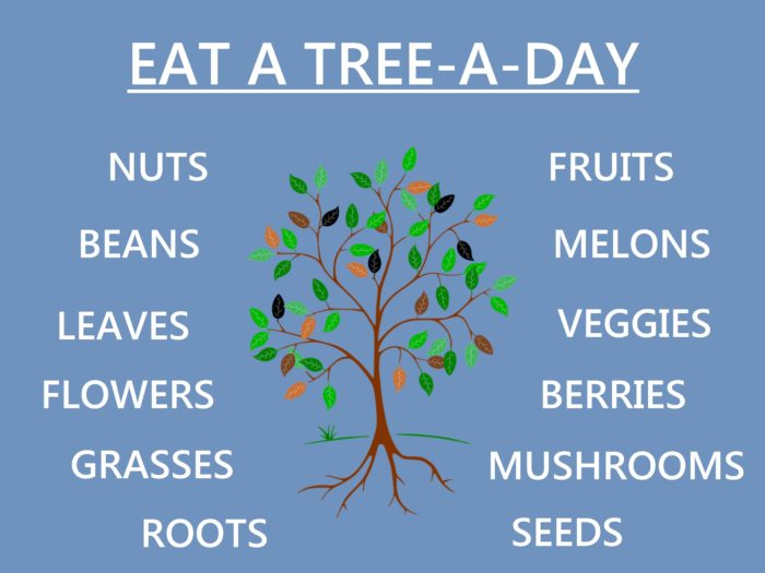 3 Food Philosophies by Aria Zoner - Tree A Day