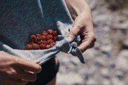 Harvesting wild rasperries