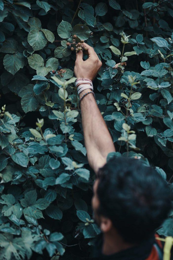 Deux Pas Vers l'Autre - Edible plants