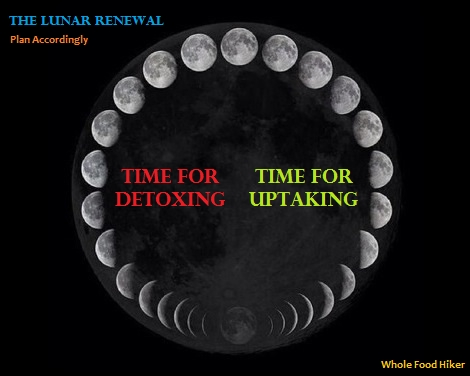 3 Core Food Philosophies by Aria Zoner - Lunar Cycle