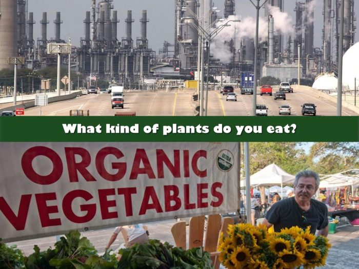 What kind of Plants do you eat - by Aria Zoner
