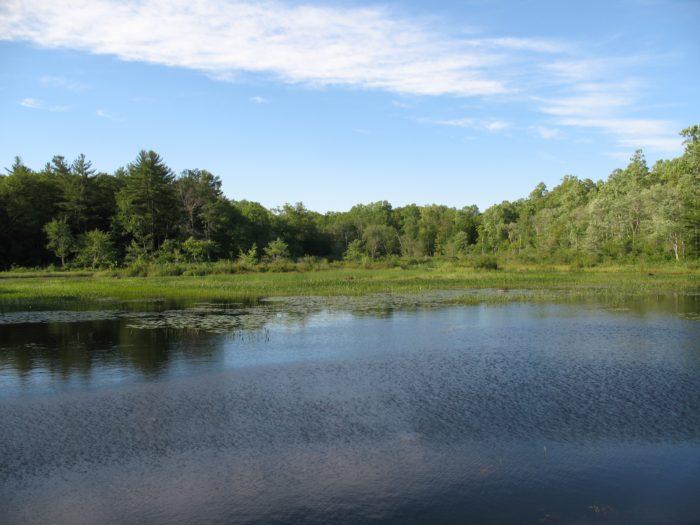 RI North South Trail pond