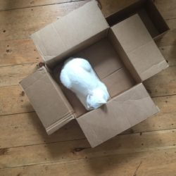 a photo of a cat in a cardboard box