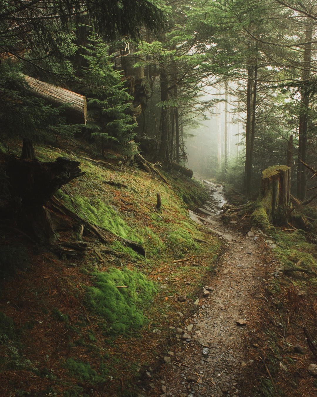 A Photographer S Favorite Images From The Appalachian Trail The Trek