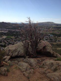 exercise tree