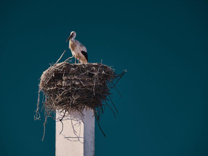 Stork in Portugal