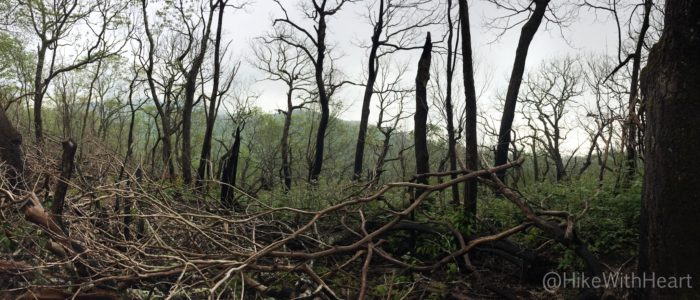 Fire damaged mountain side
