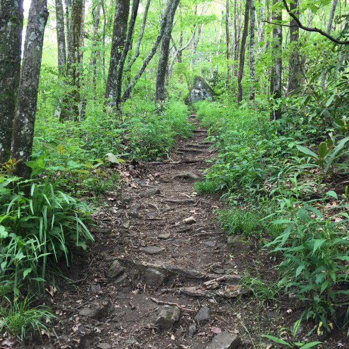 Climb to Albert Mountain