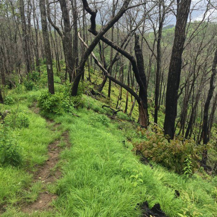 Ridge walk North Carolina Appalachian Trail