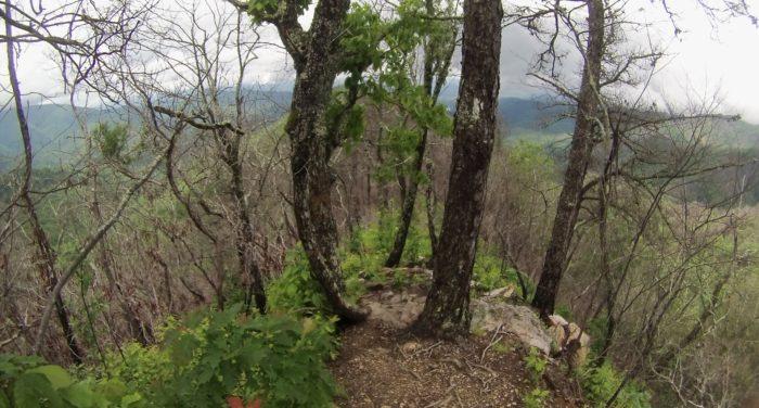 Ridge Walk View
