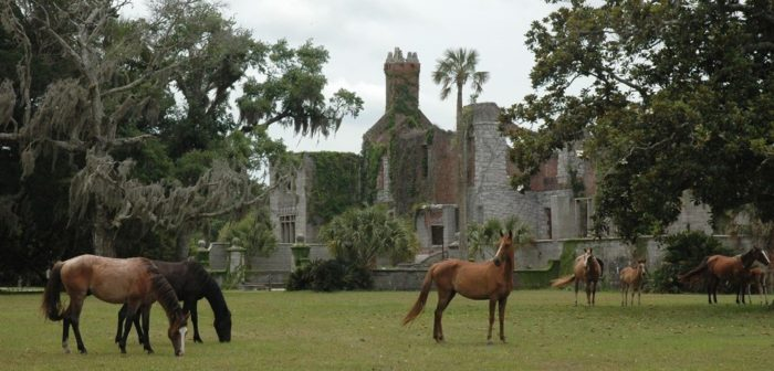 Best Hikes in the Southeast: Cumberland Island
