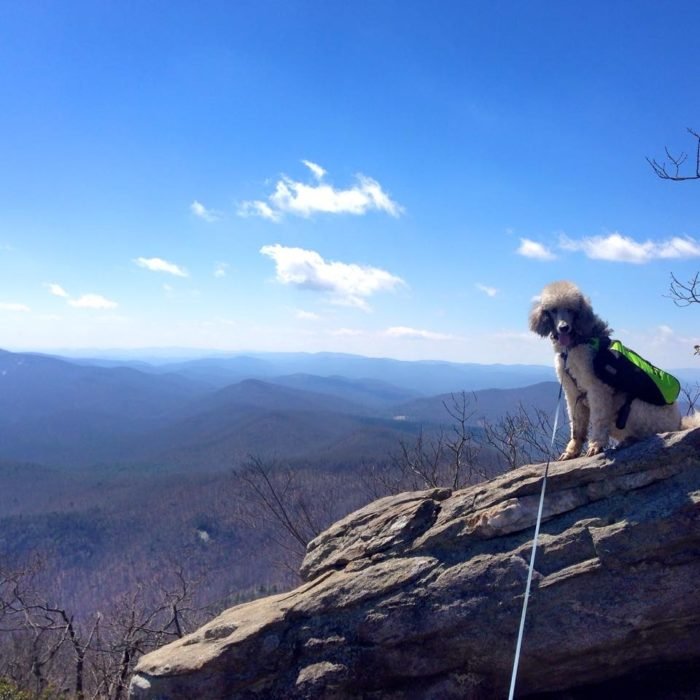 Best Hikes in the Southeast: Blood Mountain