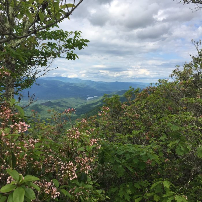 What a view! Blooms in North Carolina on the Appalachian Trail